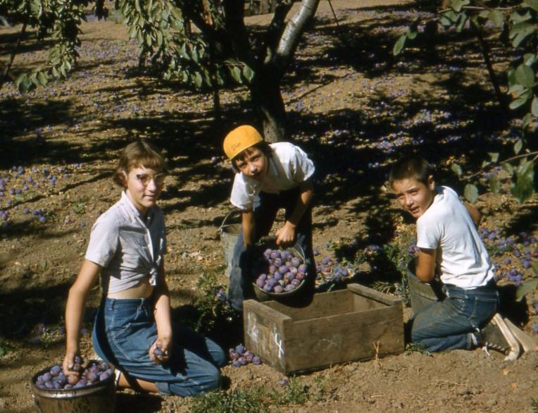 DK&B_Picking_1957_crop
